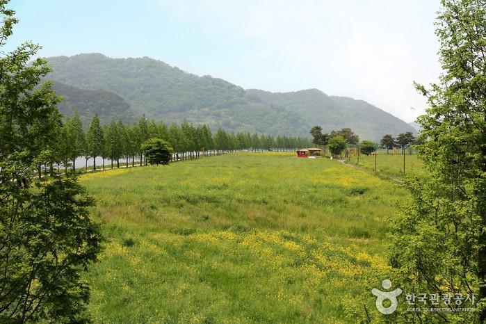 남지 체육공원 유채꽃밭 전경