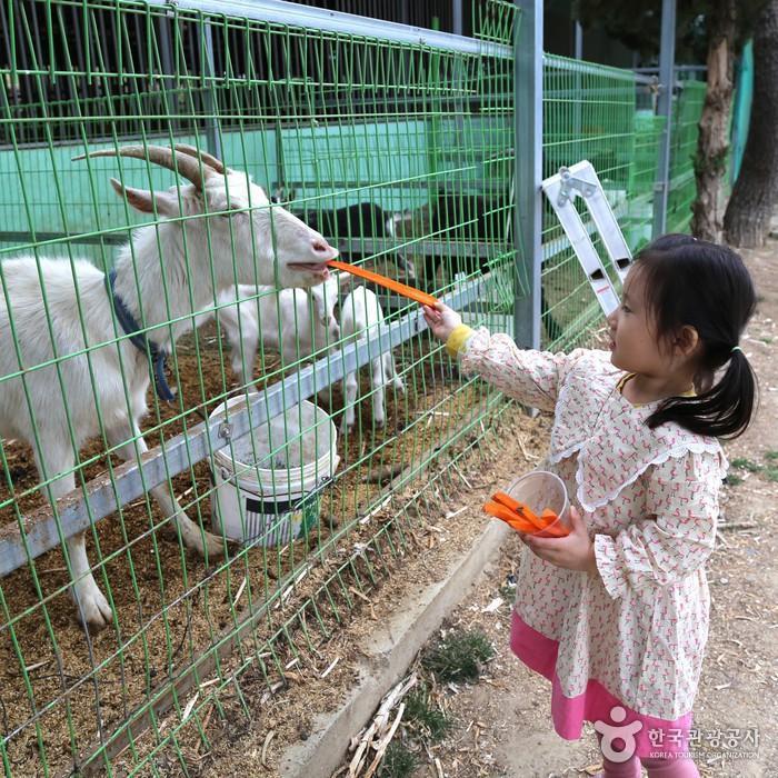 동물 먹이주기 체험