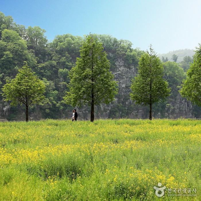 남지유채꽃밭